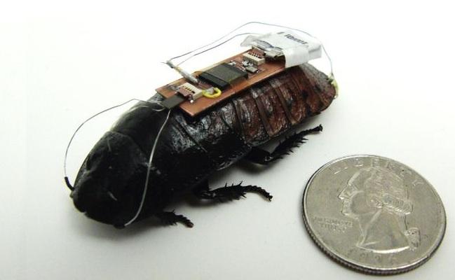 Cyber insekti