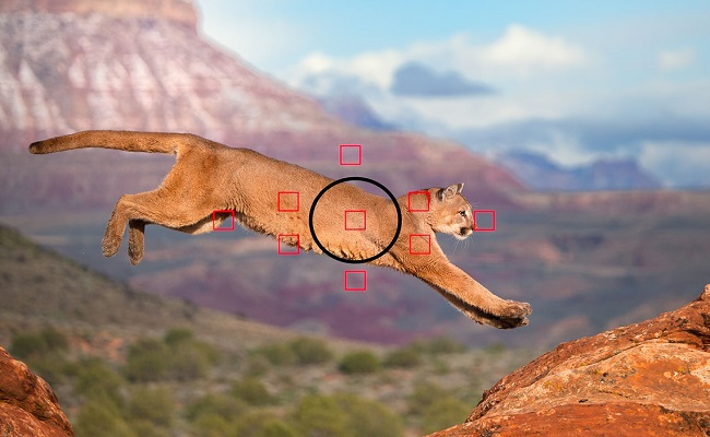 Kamerat e pesë telefonave me teknologjinë më të mirë auto fokus